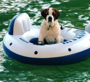 Some dogs, like some people, me incl uded, are quite content to spend their vacation on a raft. Photo by Dennis Forer